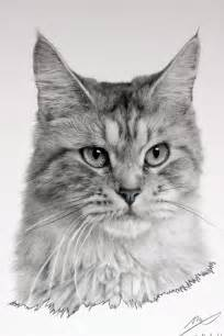 drawings of cats cat drawing by sharppower on deviantart