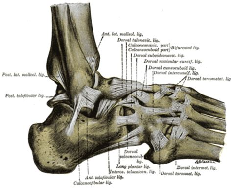 ankle sprain physiopedia