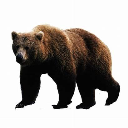Bear Transparent Alphabetical Purepng Heels Kan Random