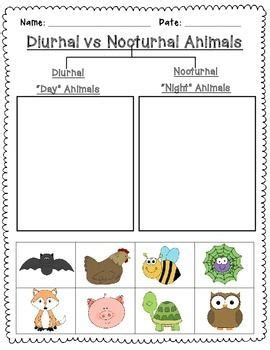 nocturnal animals preschool lesson plans 239 best science activities images on teaching 418