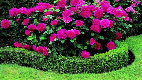 Anspruchslose Garten Pflanzen by David Pflanzen F 252 R Ihren Garten