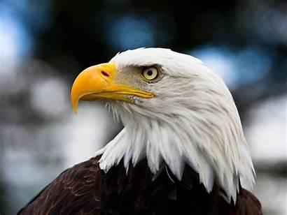 Eagle American June