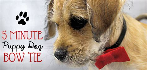 minute dapper puppy dog bow ties
