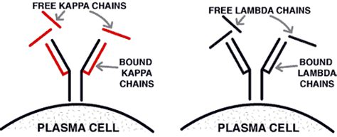 high kappa light chain case 24 summary teamhaem