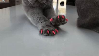 Cat Caps Nail Soft Paws Claws Accidental