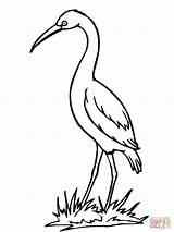 Coloring Stork Crane Pages Drawing Bird Storks Sandhill Printable Clipart Cartoon Getdrawings Clipartbest Carrying Popular Getcoloringpages Clip Library Coloringhome sketch template