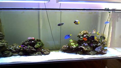 aquarium eau de mer fish only eau de mer