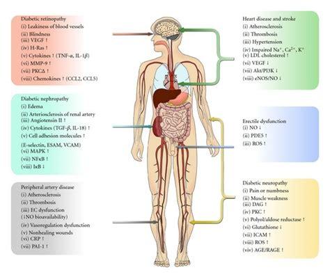 diabetic vascular disease effects  symptoms