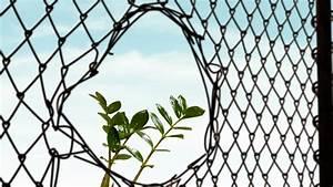 Wer Zahlt Zaun Zwischen Zwei Grundstücken : das loch im zaun richtig reparieren so muss das ~ Whattoseeinmadrid.com Haus und Dekorationen