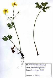 Was Ist Ein Herbarium : schule 1 0 das herbarium lehrerzimmer ~ A.2002-acura-tl-radio.info Haus und Dekorationen