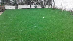 Gazon En Rouleaux : pelouse rouleaux gazon jardinier laurent entreprise de jardin ~ Melissatoandfro.com Idées de Décoration