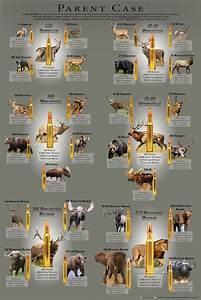 Ammunition Comparison Chart Cartridge Comparison Guide Creates Parent Case Poster