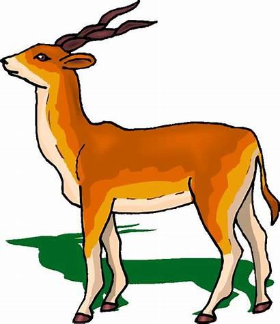 Antelope Clipart Clip Eland Gazelle Hay Cliparts
