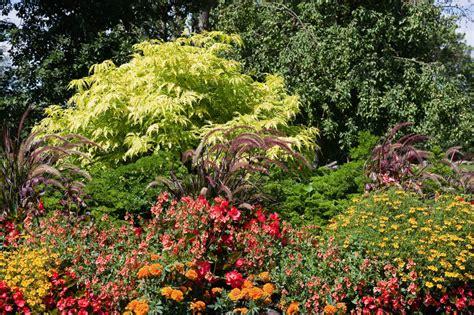 Holunder Im Garten » Pflanzen Und Pflegen