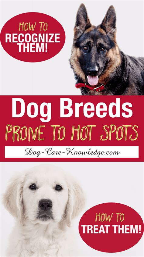 hot spots  dogs  steps   cure