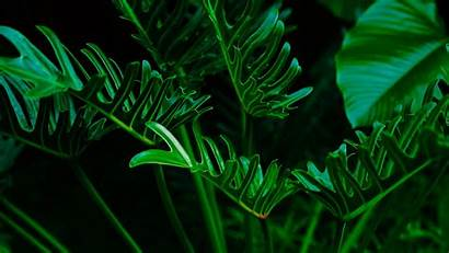 Plant Leaves Background Exotic 1080p 1920 Wallpapers