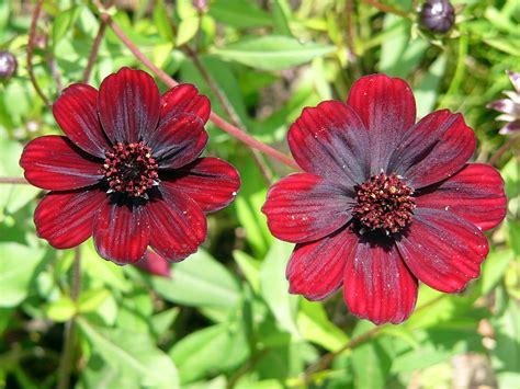 foto di fiori belli fiori rari i pi 249 belli al mondo lombarda flor