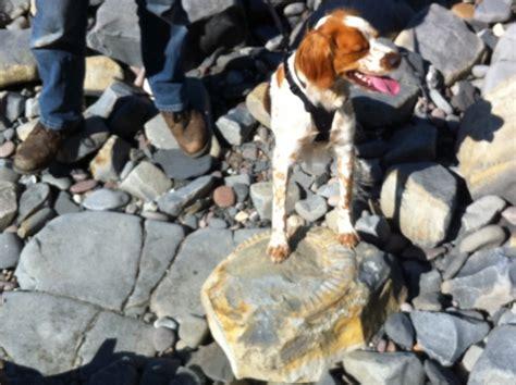 wacko finds jack latest members somerset gastropod coast