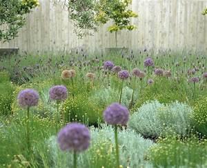 Allium Pflanzen Im Frühjahr : zypressen heiligenkraut pflanzen f r h bsche farbtupfer im garten ~ Yasmunasinghe.com Haus und Dekorationen