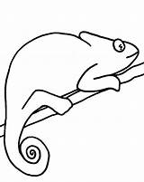 Chameleon Coloring Pages Reptiles Chameleons Lizards Cartoon Pattern Coloringbay Mixed Disimpan Dari sketch template