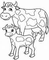 Cow Coloring Cows Realistic Sheet Printable Colouring Adults Animals Adult Young Portrait sketch template