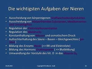 Ph Wert Berechnen Aufgaben : anatomie niere und ableitende harnwege ppt herunterladen ~ Themetempest.com Abrechnung