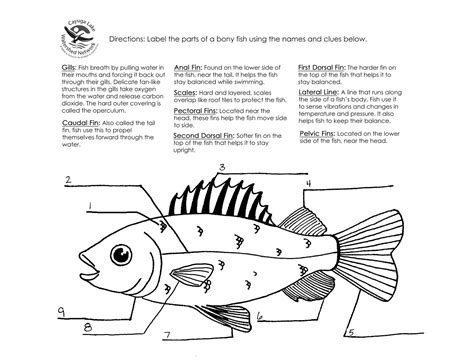 fish anatomy worksheets worksheets for all and worksheets free bonlacfoods