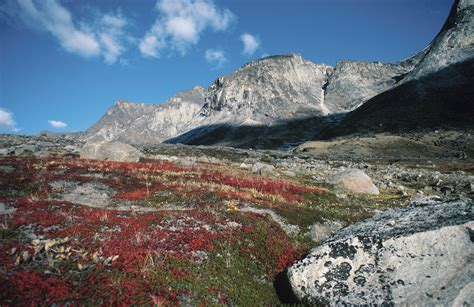 The Biotic Factors For Alpine Tundra Sciencing