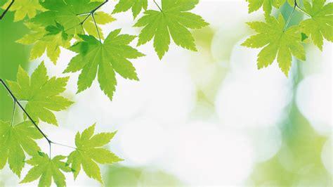 Fresh Photo Hd by Fresh Backgrounds Green Leaf Fresh Wallpaper 1667