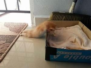 Fotos de gatos graciosos - AnimalesMascotas