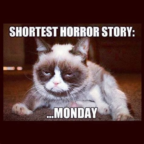 Monday Cat Meme - ah monday mornings one way or another there are very few things that are quite like them
