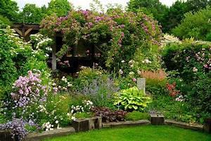 Rose Mein Schöner Garten : stachellose kletterrosen mein sch ner garten forum ~ Lizthompson.info Haus und Dekorationen