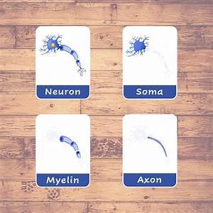 Neuron Or Brain Cell