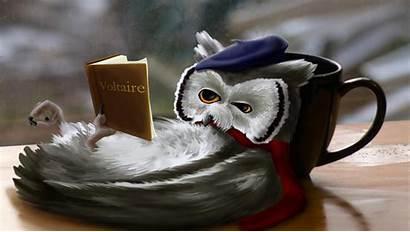 Owl Fantasy Reading Funny Wallpapers Jokes Desktop