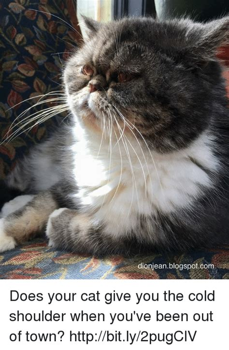 Cold Shoulder Meme - dionieanblogspotcom does your cat give you the cold shoulder when you ve been out of town