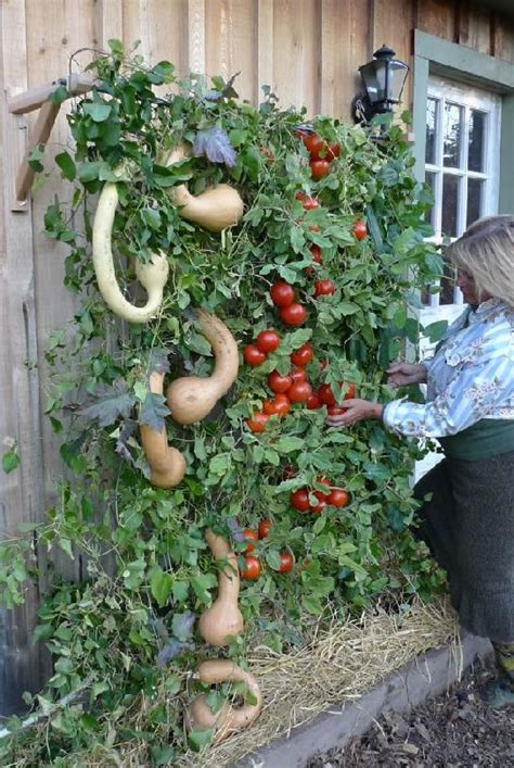 How To Start A Vertical Garden by How To Start A Vertical Garden Book Free On