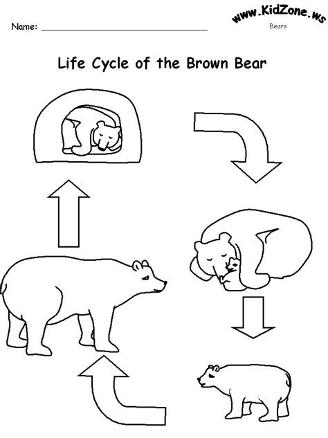 worksheets cycle of a brown no words 604 | bearlifecycle