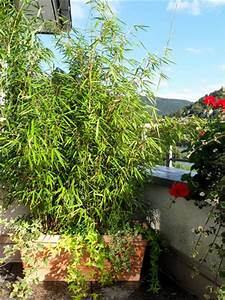 Pflanzen Für Dachterrasse : garten moy bambus pflanzen als sichtschutz fuer terrasse ~ Michelbontemps.com Haus und Dekorationen