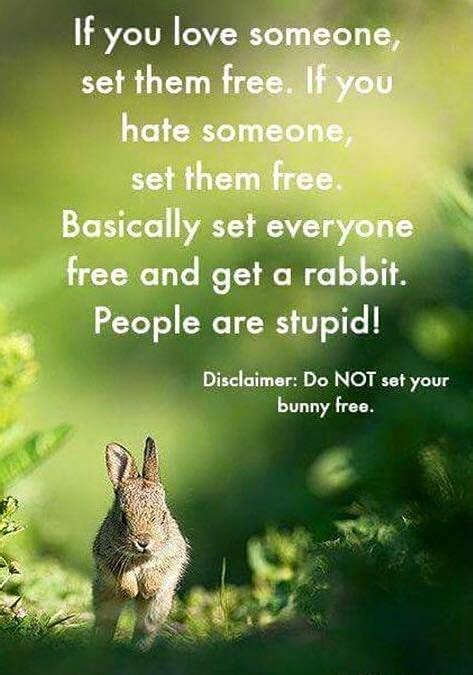 Silly Rabbit Meme - 468 best what did the rabbit say images on pinterest baby bunnies bunnies and rabbits