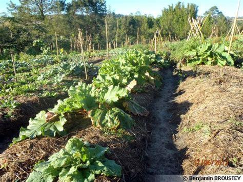 cuisiner les fleurs de courgette la permaculture au jardin