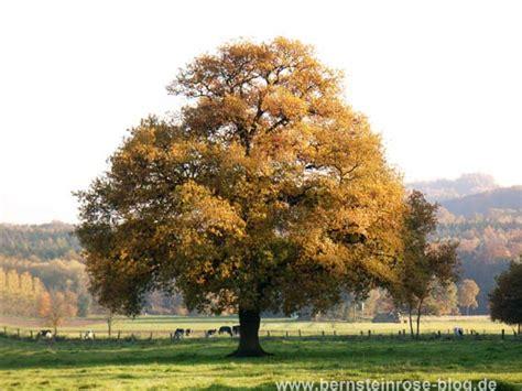 der eichenbaum atemmeditation mit den jahreszeiten