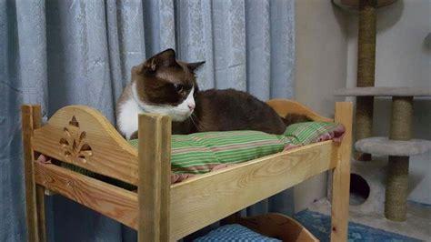 pallet cat bunk bed