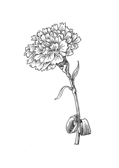 pin  treestreasure  coloring carnation tattoo