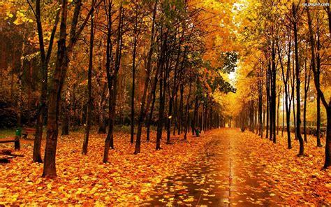 Liście, Jesienią, Park, Złote Na Pulpit