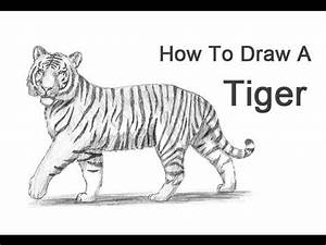 How to Draw a Tiger - YouTube