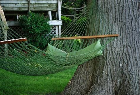 Hammock In The Trees by Avoid Costly Springs Tree Services By Hanging A