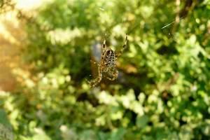 Faire Fuir Les Araignées : comment faire fuir les araign es d tente jardin ~ Melissatoandfro.com Idées de Décoration