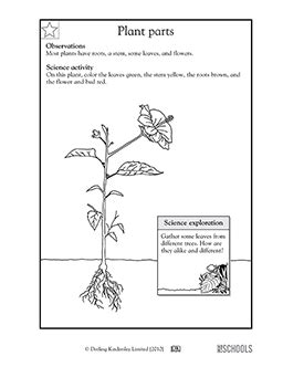 printable  grade science worksheets word lists