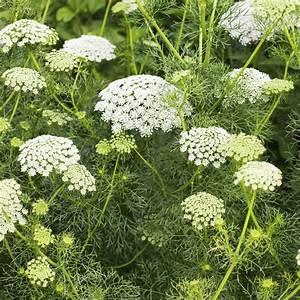 Achillee planter et cultiver ooreka for Modeles de rocailles jardin 7 achillee planter et cultiver ooreka