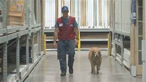 texas lowes hires vet and his therapy dog kobi tv nbc5 With lowes hires service dog